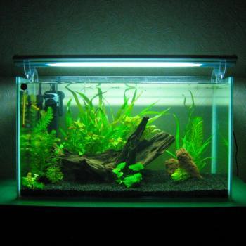 Домашний аквариум с подсветкой