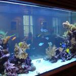 Пример готового аквариума